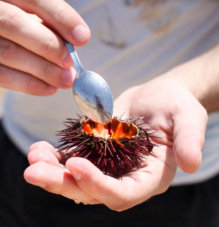 Man holding a sea urchin with lemon for eating it on the beach