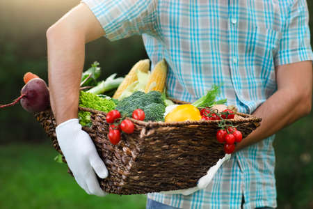 hand basket: Basket filled fresh vegetables in hands of a man wearing gloves