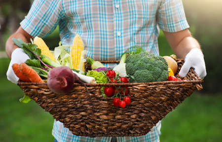 Basket filled fresh vegetables in hands of a man wearing gloves