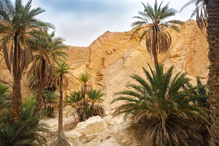 mountain oasis: View of mountain oasis Chebika, Sahara desert, Tunisia, Africa Stock Photo