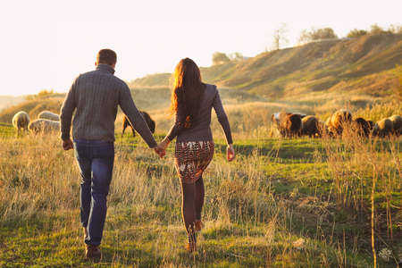 couple nature: Couple holding hand in hand romantic walk on the autumnal meadow with sheeps