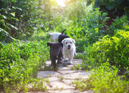 마당에 사랑스러운 골든 리트리버 강아지의 그룹 스톡 콘텐츠