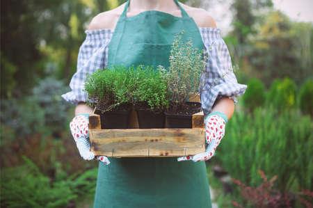 園芸用品センターで彼女の手で植物とボックスを保持している女性。クローズ アップ