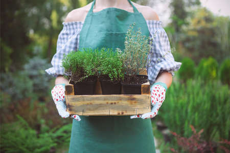 jardines con flores: Mujer que sostiene una caja con plantas en sus manos en el centro del jardín. Acercamiento