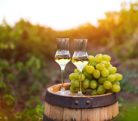 Two glasses of liquor or grappa with bunch of grapes against green background of the vineyard
