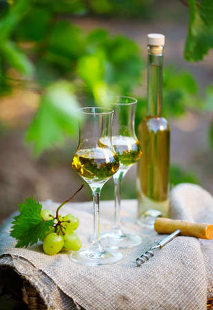 grappa: Bottle of liquor or  grappa and glasses with bunch of grapes against green background of the vineyard