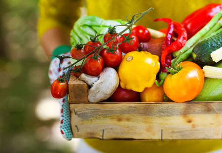 fruit basket: Woman wearing gloves with fresh vegetables in the box in her hands. Close up Stock Photo