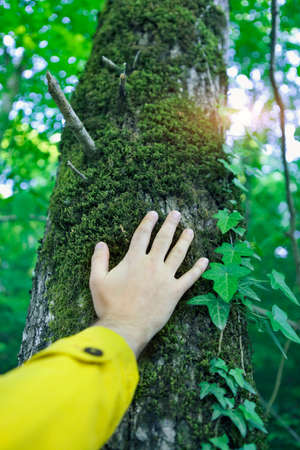 turn away: Man touching a tree in a forest. Close up