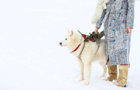 snow forest: Young girl with Husky dog on snow in the winter Stock Photo