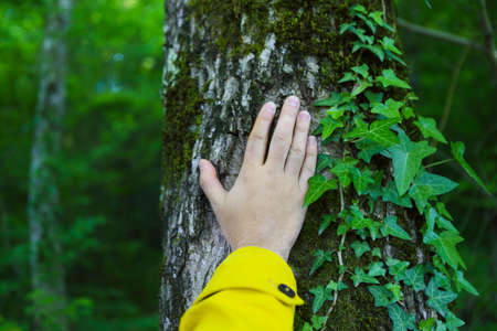 forestation: Man touching old tree. Wild nature and enviroment protection concept Stock Photo