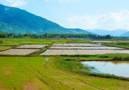 blue green landscape: Rice field green grass blue sky mountain cloudy landscape background Stock Photo