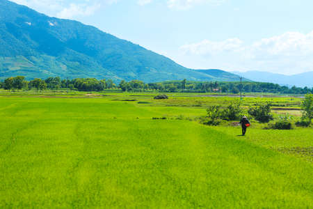 Rice field green grass blue sky mountain cloudy landscape background Stock Photo