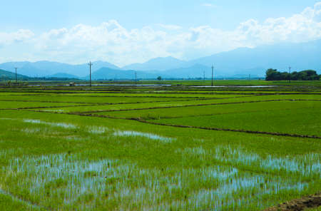blue green landscape: Rice field green grass blue sky cloud cloudy landscape background