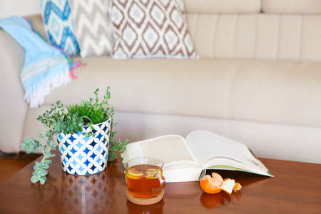 red sofa: Pot with succulent plants and opened book with the tea on wooden table. Cozy room interior