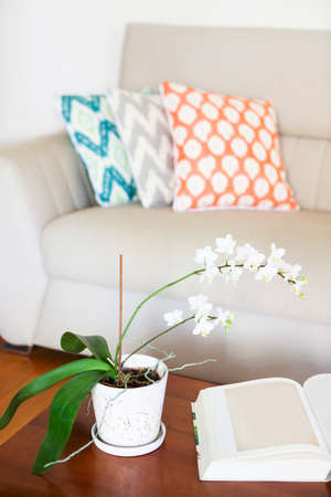 green couch: Beautiful white orchid and opened book on wooden table. Cozy room interior