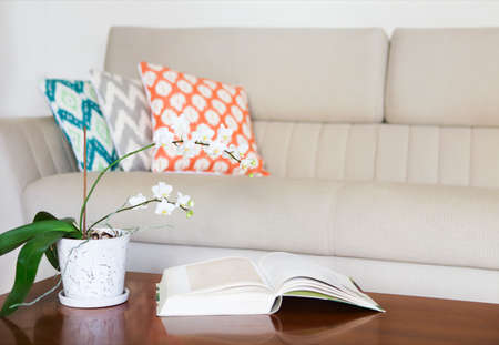 red sofa: Beautiful white orchid and opened book on wooden table. Cozy room interior
