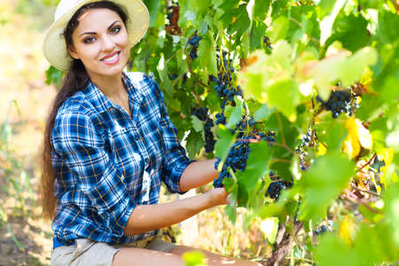 Grapes harvest. Young farmer woman with freshly harvested grapes. Close up