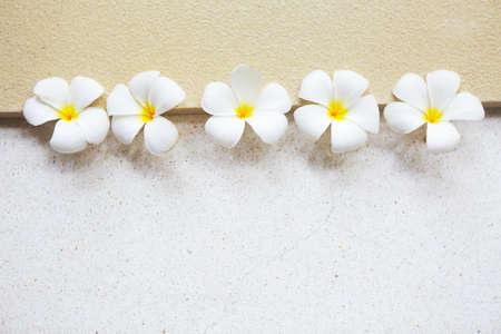 Flower of white frangipani on light background Stock Photo