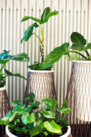 Many house plants in pots in the modern white background