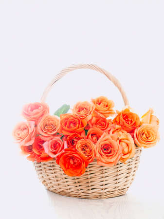 Wooden wicker basket with beautiful orange roses on white background