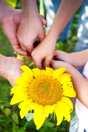 From above crop unrecognizable man and woman with child holding together bright sunflower in summer day in garden