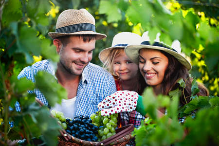 Cheerful young family in casual clothes and hats with wicked basket full of green and black grape looking at camera while spending summer day on grape farm 스톡 콘텐츠