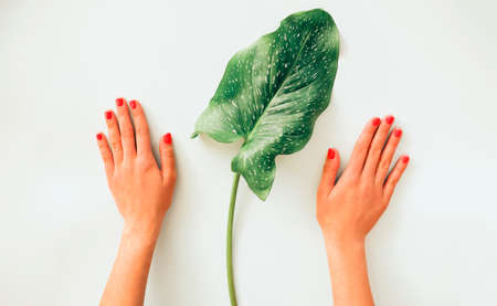 Top view of anonymous female with green plant leaf demonstrating bright painted nails on light blue background
