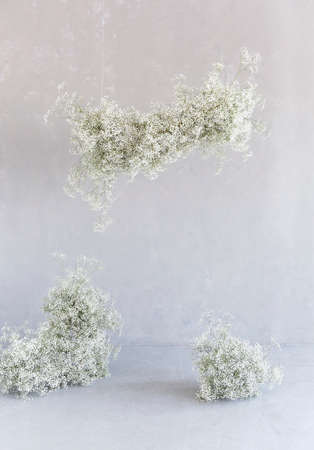 Elegant white installation of gypsophila flowers in calm studio with shabby light wall