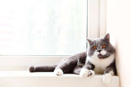 Gray and white cat with orange eyes chilling on edge of white window in light apartment