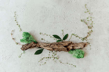 Top view of piece of bark decorated with green leaves and plants and placed on white stone surface