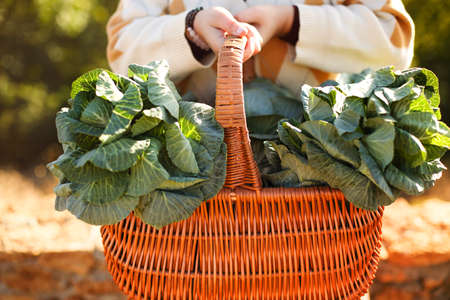 Unrecognizable young female leaning on wicker basket with fresh cabbage and touching face while resting on brick fence on sunny summer day in countryside 版權商用圖片