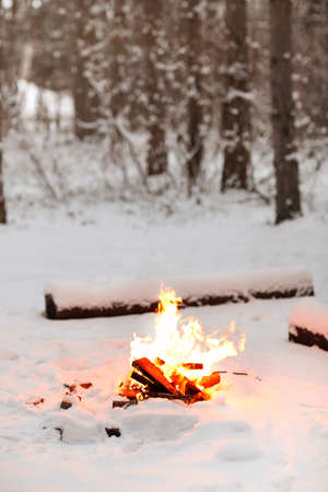 Bright bonfire burning on snowy ground near logs in winter evening in woods