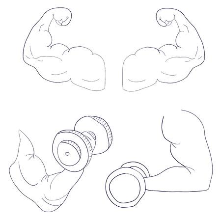 flexing: freehand cartoon strong arm flexing bicep sport Illustration
