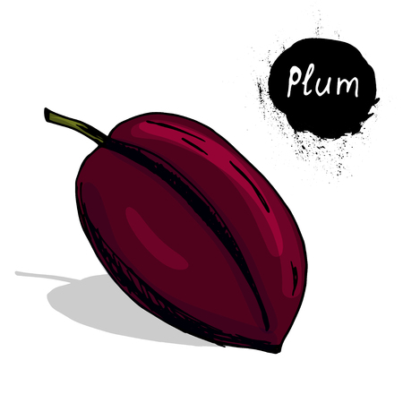 Plum. Useful fruits and berries. Hand drawing. Hatch. For printing on T-shirts. Sticker. Print. 向量圖像
