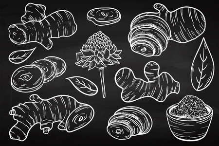 Ginger style hand drawing on a chalk board. Useful root vegetable. Herbal spices. Illustration in engraving style.