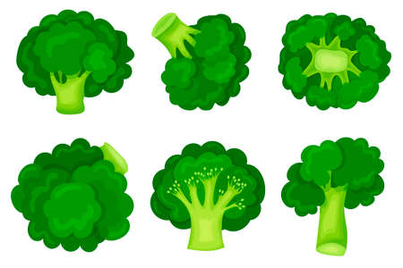 Green broccoli in a modern flat style. Set. Healthy diet. Slimming. Icon isolated on white background. For your design