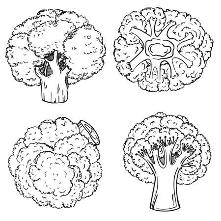 Broccoli in a modern grunge style. Hand drawing. Circuit. Healthy diet. Slimming. The icon is isolated on a white background. For your design