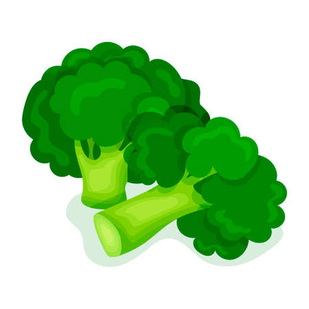 Green broccoli in a modern flat style. Healthy diet. Slimming. Icon isolated on white background. For your design