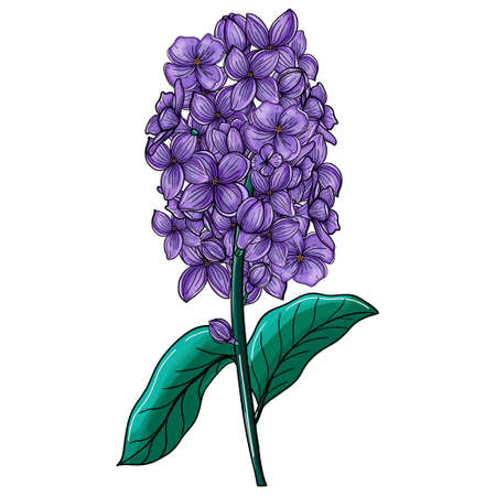 Lilac flowers. Hand drawing in sketch style. The object is isolated on a white background. 矢量图像