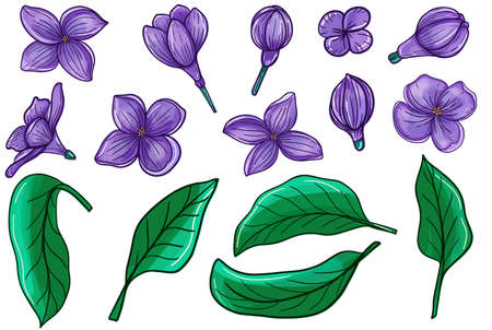 Lilac flowers set. Hand drawing in sketch style. The object is isolated on a white background. 矢量图像