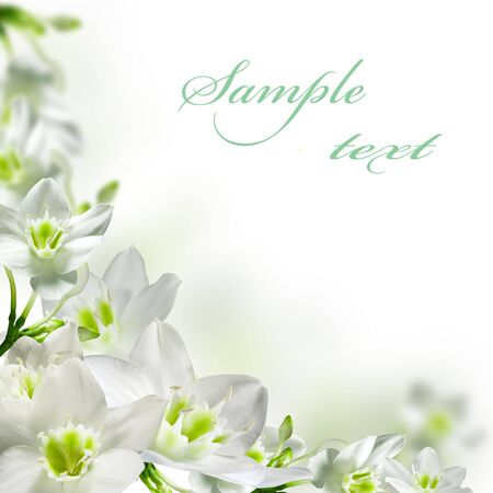 White flowers isolated over white photo