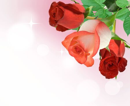 three rose red on pink background Stock Photo - 7157146