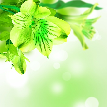 flower flora: Green flowers lily on white green background postcard