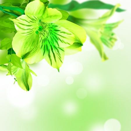 bouquet fleur: Lily fleurs vert sur fond vert blanc carte postale