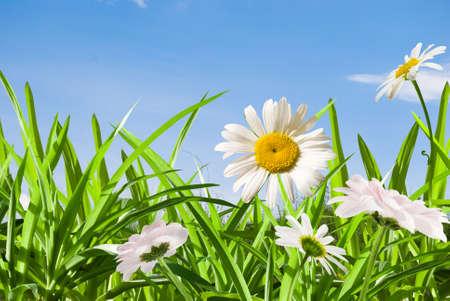 daisywheel: daisywheel much with green leaf on background sky
