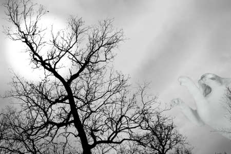 mysticism black tree with moon and snarl cat photo