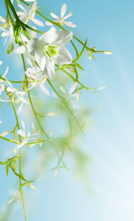 white flowers on blue background photo
