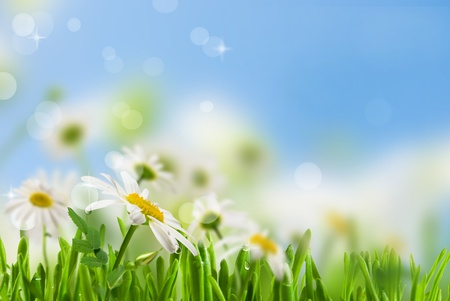 daisywheel veel met groen blad op achtergrond hemel