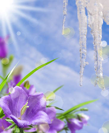 campanula with grass and icicle on background blue sky sun photo
