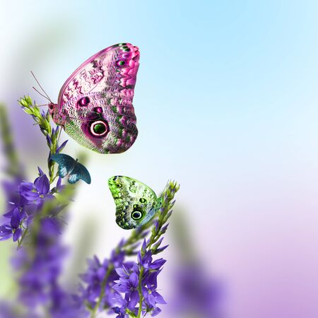april flowers: wild flowers blue blooming with butterfly